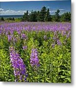 Hedge Woundwort Flower Blossoms And Field Metal Print
