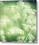 Hedgerow Blossom In Spring Metal Print