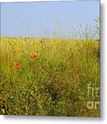 Hedgerow Flowers Metal Print