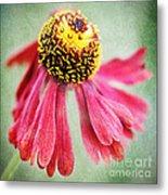 Helenium Flower 2 Metal Print