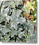 Helix Glacier Ivy Metal Print