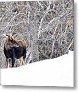 Hello Moose Metal Print