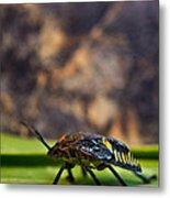 Hemiptera Nymph Walikng 1 Metal Print