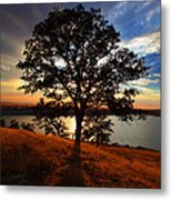 Hensley Tree Metal Print