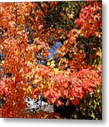 Here Today Gone Tomorrow Metal Print