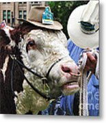 Hereford Bull With Akubra Hat In Hyde Park Metal Print by Kaye Menner