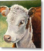 Herford Calf  Metal Print
