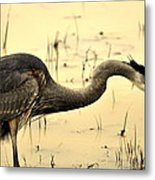 Heron Fishing Metal Print