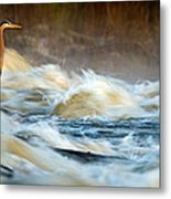 Heron In Centaur Shute Metal Print