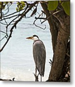 Heron Metal Print by Jane Rix