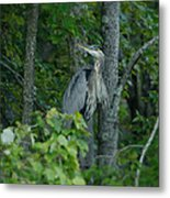 Heron On A Limb Metal Print