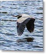Heron Over Water Metal Print