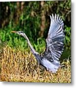 Heron Taking To Flight Metal Print