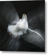 Herring Gull Abstract Metal Print