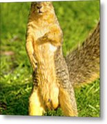 Hey Buddy Have You Seen My Nuts Metal Print by James Marvin Phelps