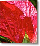 Hibiscus Blossom In Red Metal Print