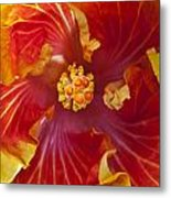 Hibiscus Center Metal Print