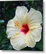 Hibiscus Faded Beauty Metal Print