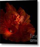 Hibiscus Glow Metal Print
