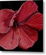Hibiscus Happiness Metal Print