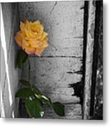 Hidden Color Metal Print