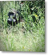 Hiding In Tall Grass Metal Print