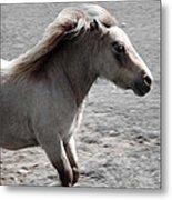 High Spirited Pony Metal Print
