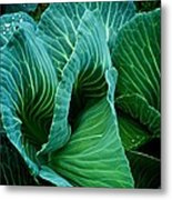 High Summer Cabbage Metal Print