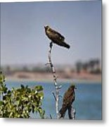 Higher Up The Tree Metal Print