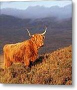 Highland Cattle Landscape Metal Print
