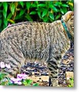 Highland Lynx Cat In Garden Metal Print
