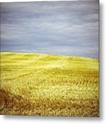 Hills Of Gold Metal Print