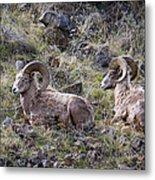 Hillside Rams Metal Print