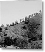 Hilltop In A Row - Black And White Metal Print