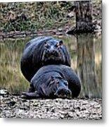Hippos In Love Metal Print