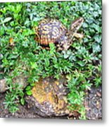 Hitchin A Ride On A Turtle  Metal Print