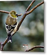 Ho Hum Bird In An Ice Storm Metal Print