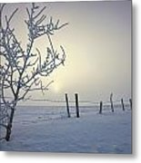 Hoar Frost Covering Trees And Barbed Metal Print