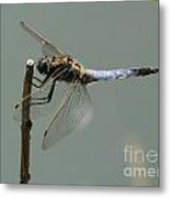 Hold On My Dear Dragonfly Metal Print