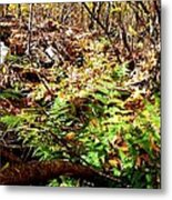 Holding Out Enjoying The Suns Warmth Metal Print