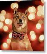 Holiday Outfit Metal Print by DancingShiba