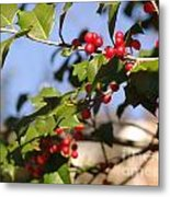 Holly 5 Metal Print