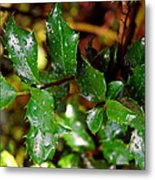 Holly Daze Dew Drops Metal Print