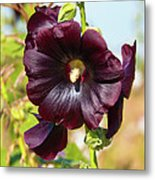Hollyhock 7193 Metal Print