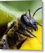 Honey Bee 2 Metal Print