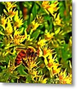 Honey Bee And Sedum  Metal Print