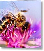 Honey Bee  Metal Print by Elena Elisseeva