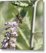 Honey Bee In Flight On Lavender Metal Print