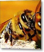 Honey Bee Metal Print