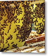 Honey Bees On A Beehive And Honeycombs Metal Print